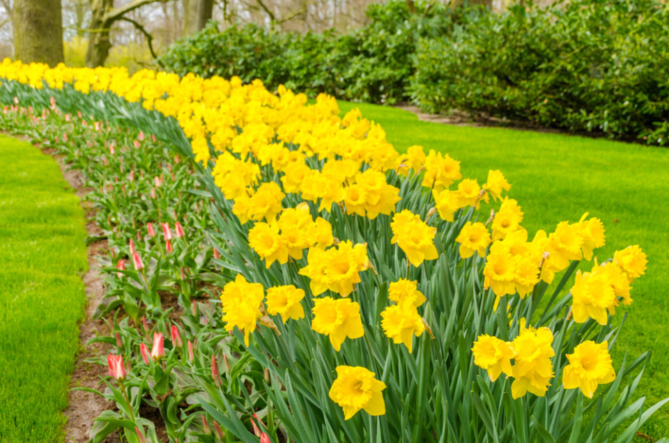 Welsh Traditions – Celebrate St. David's Day on March 1!