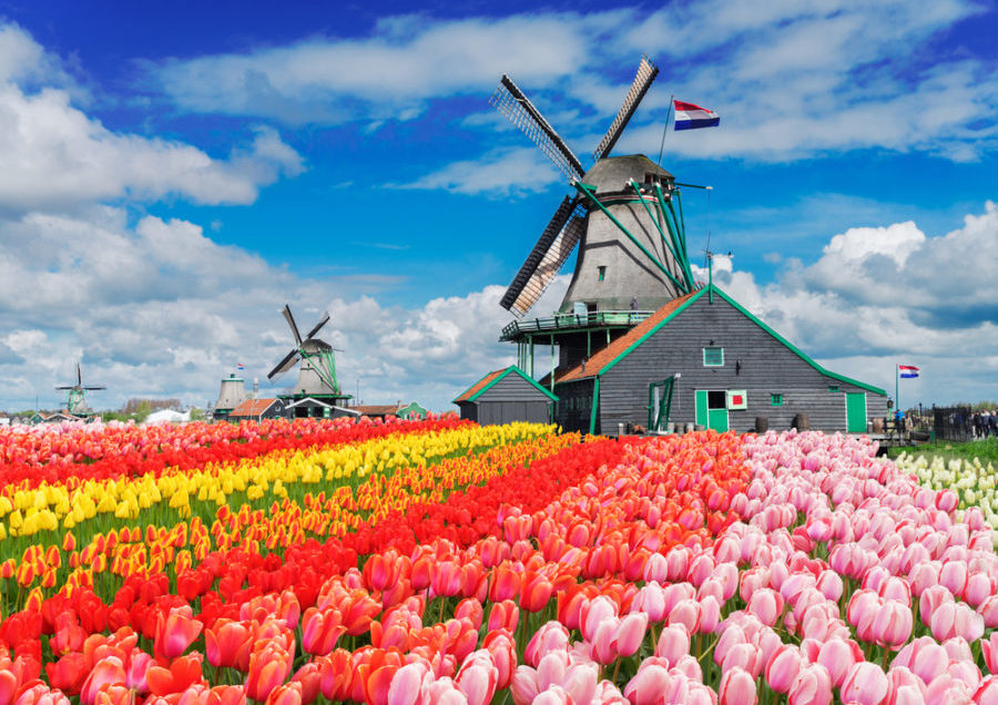 The Netherlands Tulip Trail   Spring's Floral Beauty