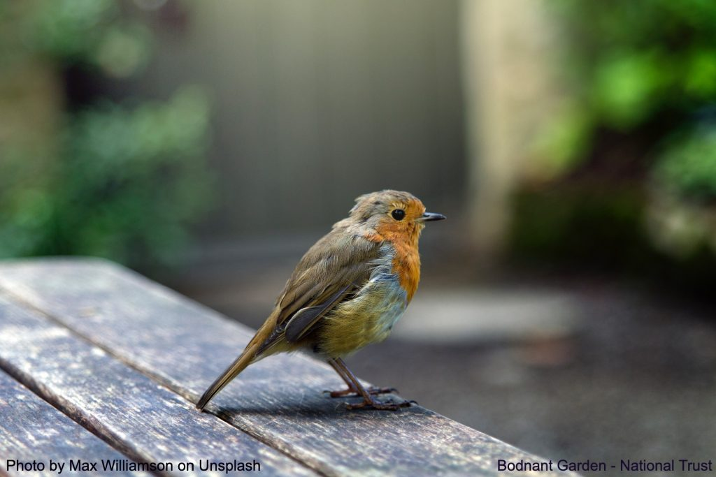 Small bird at Bodnant Gardens, National Trust, Northwest Wales